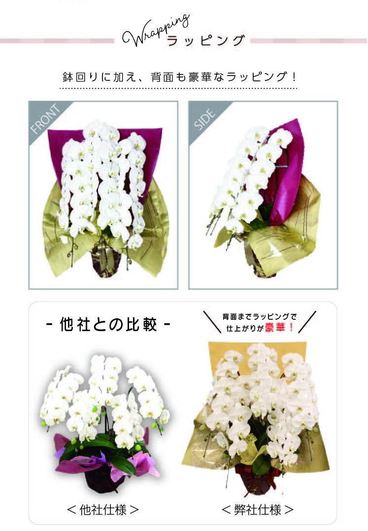 胡蝶蘭 5本立ち