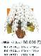 胡蝶蘭3本立ちロング
