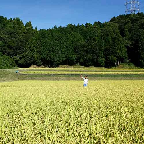 【向平13】《シルバー》実りの百年米 1袋5kg入り玄米