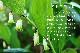 J's美容健康茶 王 [ WAN ] 60g(1.5g×40包) J.ノリツグさん監修 玄米入りアマドコロ茶 常温便・クール冷蔵便・冷凍便可