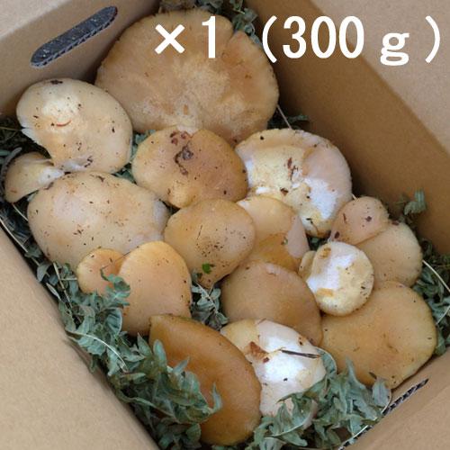 天然 むき茸 (ムキタケ)