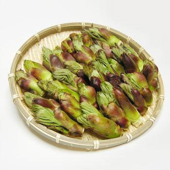天然 たらの芽(タラノメ)Sサイズ