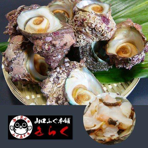 日本海産天然さざえ「活サザエ約1kg/冷蔵」【送料無料】