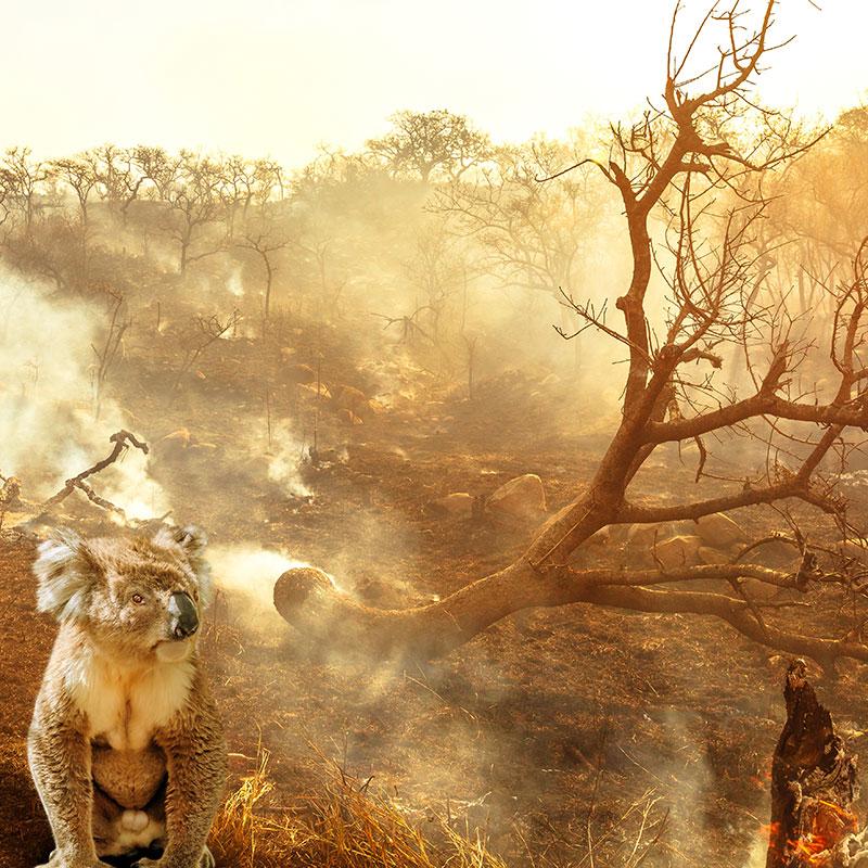 火事 オーストラリア