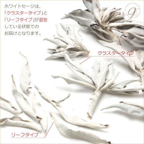無農薬!ネイティブアメリカンの手作りホワイトセージ☆10g☆