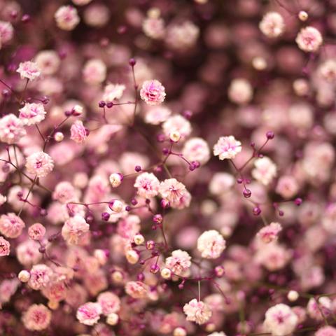赤薔薇ゴールドラメ30本とピンクのかすみ草の花束