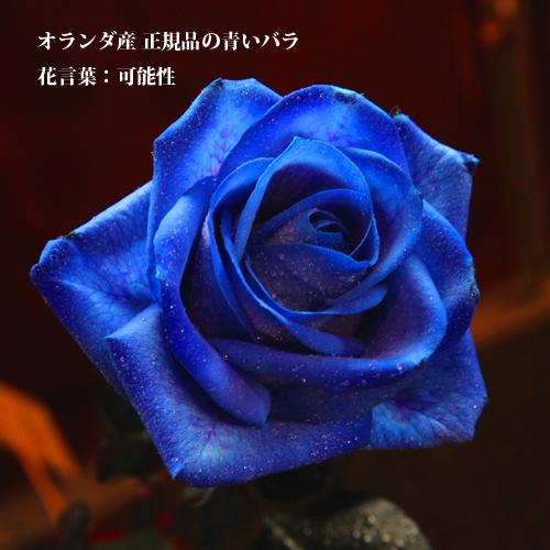 レインボーローズと青いバラのミニアレンジ
