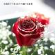 赤薔薇ゴールドラメ10本とキラキラかすみ草のアレンジメント