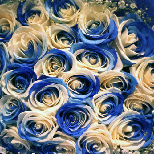 ブルーアンドホワイトローズ 20本の花束