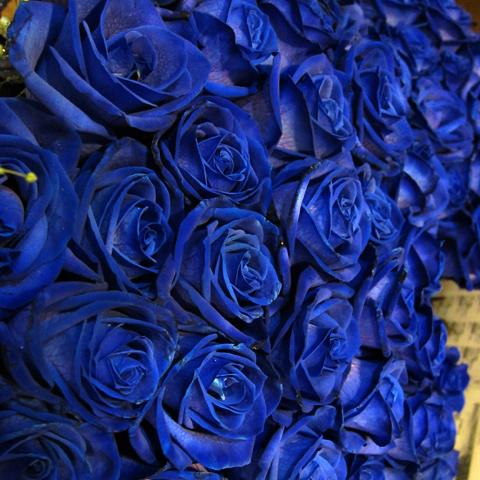 特大花束! 青いバラ200本 キラキラかすみ草付き