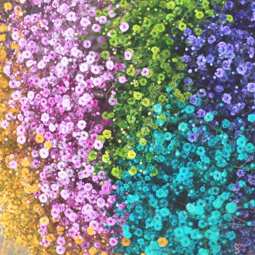 水色のかすみ草