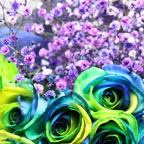 紫色のかすみ草