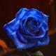 青いバラ circleglass アレンジメント(M)