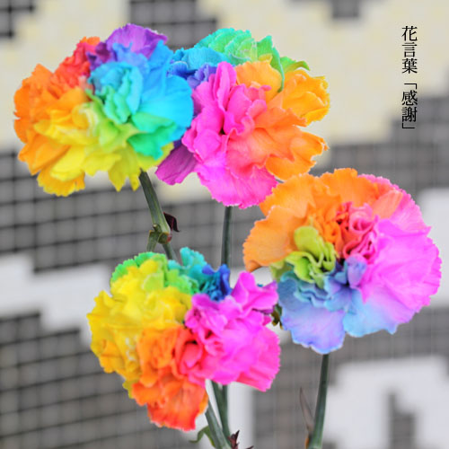 レインボーカーネーション50本の花束(キラキラかすみ草付)