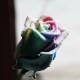 スノーレインボーローズ 10本の花束