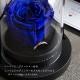 青いバラ プリザーブドフラワー リトルベル