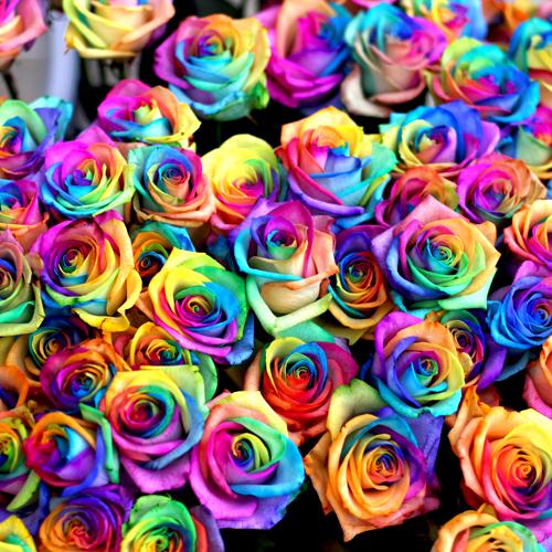 レインボーローズ108本の花束