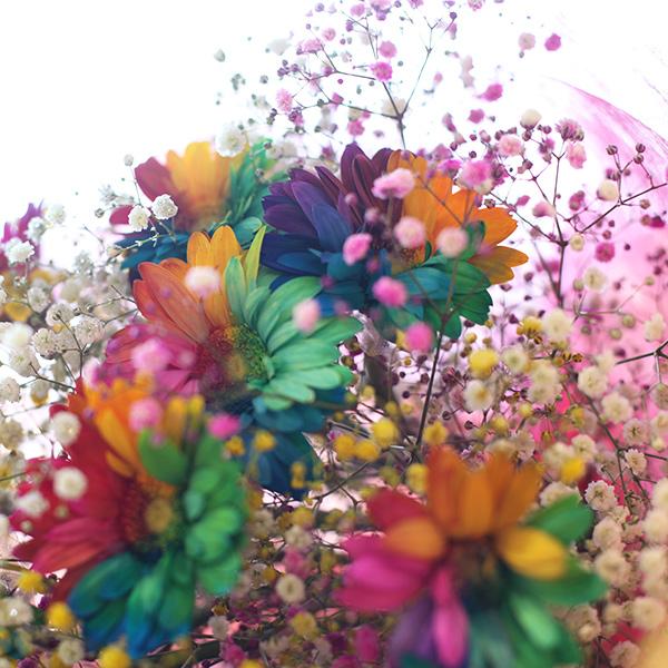 レインボーガーベラ10本の花束(キラキラかすみ草付き)