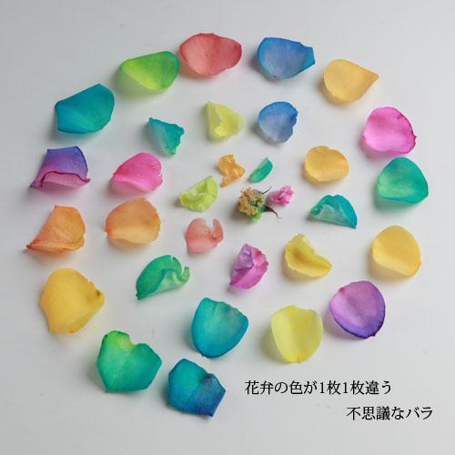 キラキラレインボーローズ1本の縦長BOXギフト(生花)