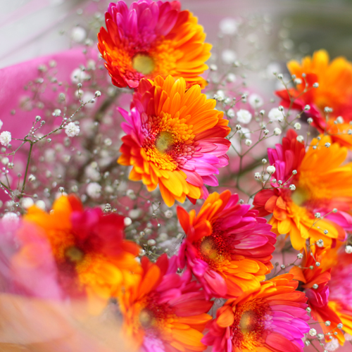 バイカラーガーベラ(ピンク×オレンジ)10本の花束(キラキラかすみ草付き)