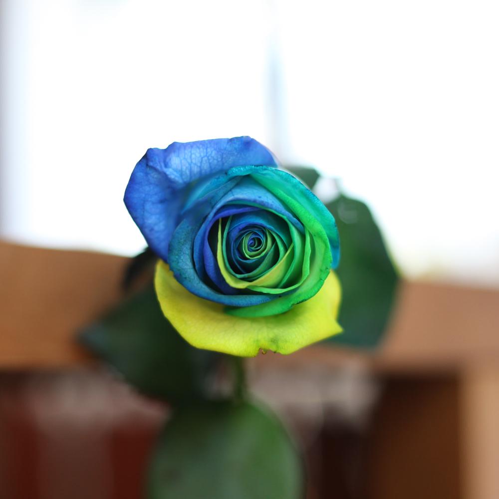 レインボーローズ オーシャン10本の花束