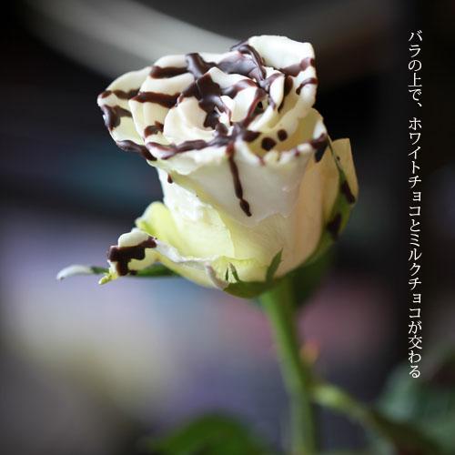 チョコレートローズ 50本の花束