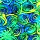 レインボーローズ オーシャン20本の花束