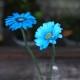 水色のガーベラ10本とキラキラかすみ草の花束