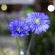 紫色のガーベラ10本とキラキラかすみ草の花束