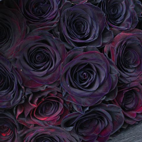 黒薔薇 30本の花束