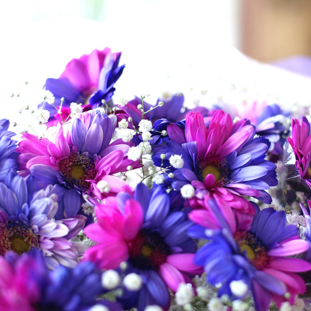 バイカラーガーベラ(ピンク×パープル)20本の花束(キラキラかすみ草付き)