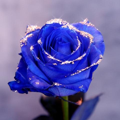キラキラ青いバラ1本の縦長BOXギフト(生花)