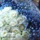 キラキラ白いバラ 50本の花束