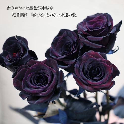 黒薔薇20本とピンクのかすみ草の花束