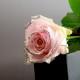 キラキラピンクローズ 1本の縦長BOXギフト(生花)