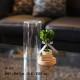 プリザーブド ハートのトピアリー(Sサイズ)コルクガラスケース
