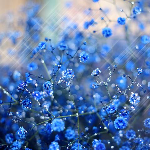 キラキラ青いかすみ草の花束