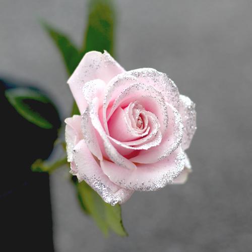 キラキラピンクローズ 100本の花束