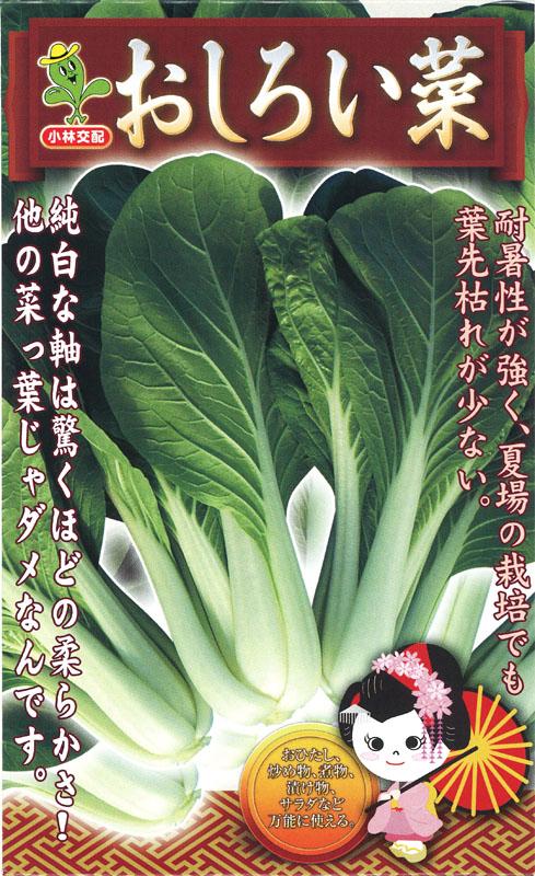 小林種苗 シロナ種子 おしろい菜 【種子有効期限2021年5月末まで】