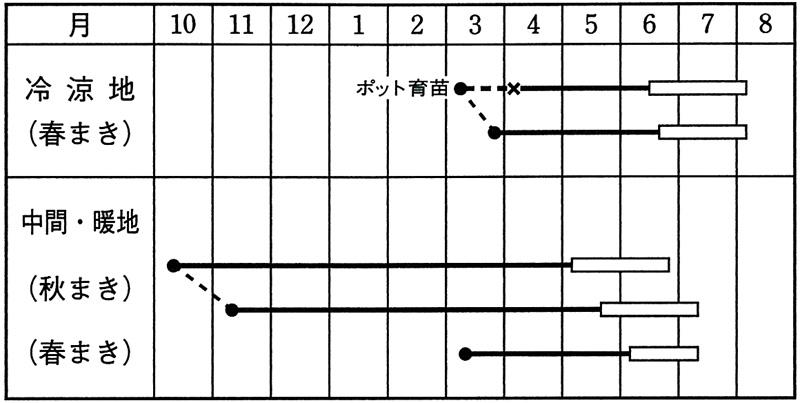 タキイ エンドウ グルメ スナップエンドウ [AEN552]
