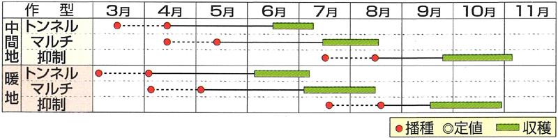 小林種苗 スイートコーン種子 秋祭り87コーン 【春種予約】