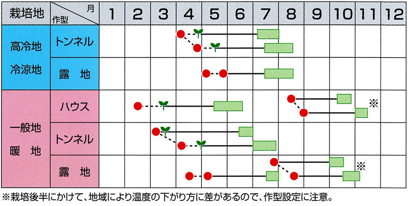 サカタ エダマメ おつな姫 【春種予約】