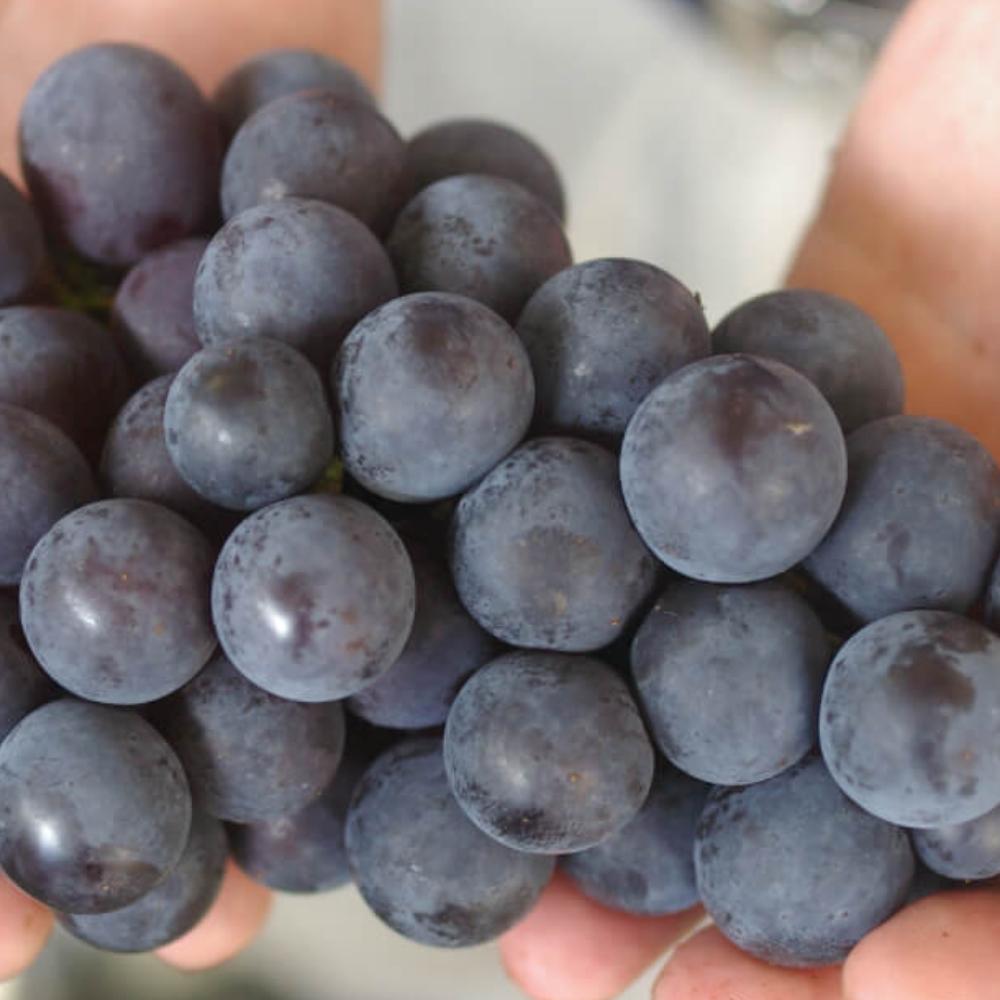 都農ワイン ロゼ・白飲み比べ ギフトセット