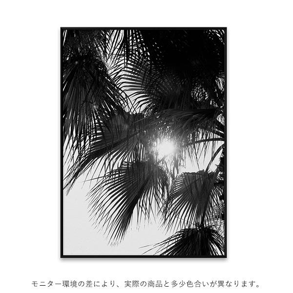 【受注発注】Paper Collective (ペーパーコレクティブ) ポスター 50×70cm Palm Trees【送料無料】