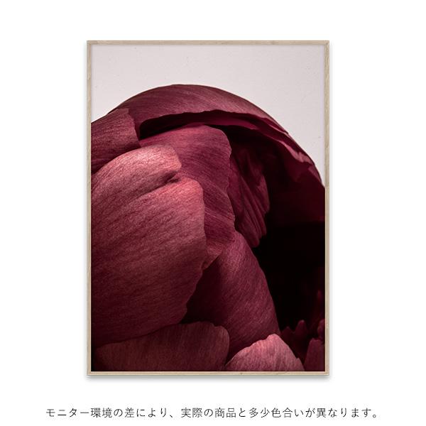 【受注発注】Paper Collective (ペーパーコレクティブ) ポスター 50×70cm Peonia 01【送料無料】
