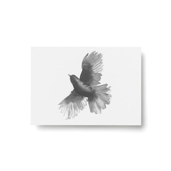 Teemu Jarvi (テーム・ヤルヴィ) ポストカード A6 SIBERIAN JAY (アカオカケス) 北欧/インテリア/ポスター【メール便】