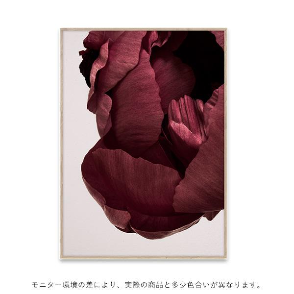 【受注発注】Paper Collective (ペーパーコレクティブ) ポスター 50×70cm Peonia 02【送料無料】