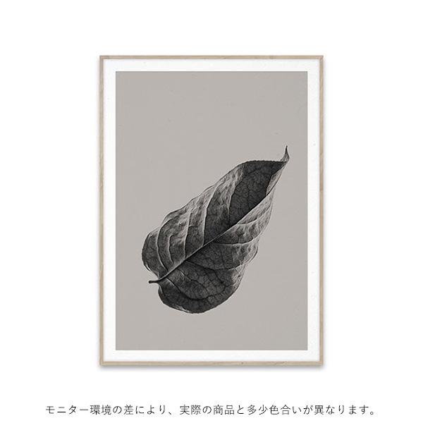 【受注発注】<br>Paper Collective (ペーパーコレクティブ) <br>ポスター 30×40cm <br>Sabi Leaf 01