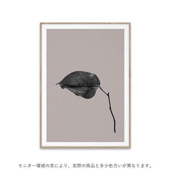 【受注発注】<br>Paper Collective (ペーパーコレクティブ) <br>ポスター 30×40cm <br>Sabi Leaf 03