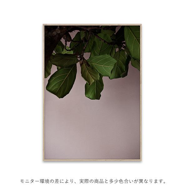 【受注発注】<br>Paper Collective (ペーパーコレクティブ) <br>ポスター 30×40cm <br>Green Leaves